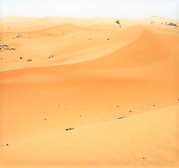 UAE, Abu Dhabi, Desert