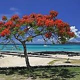 Afryka, Mauritius, Cap-Malheureux