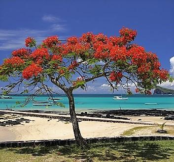Africa, Mauritius, Cap-Malheureux