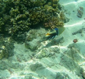 Maldives, Kuda Huraa Island, Marine Life