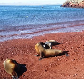 Ecuador, Galapagos, Rabida Island, Red Sand Beach