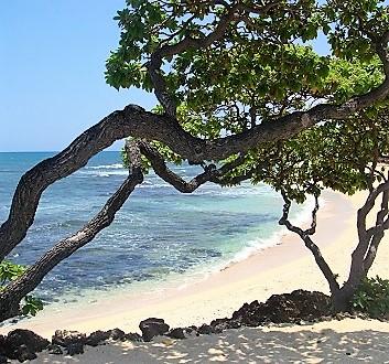 USA, Hawai'i Island, Diverse Climate Zones