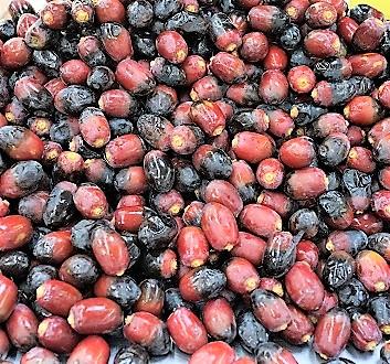UAE, Abu Dhabi, Dates Market