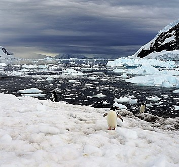Antarctica, Neko Harbour, Gentoo Penguins