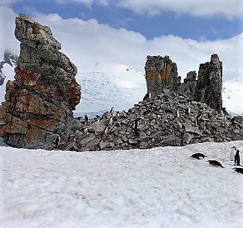 Antarctica, Half Moon Bay, Chinstrap Penguins