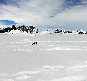 Antarctica, Walking on Ice & Adélie Penguins