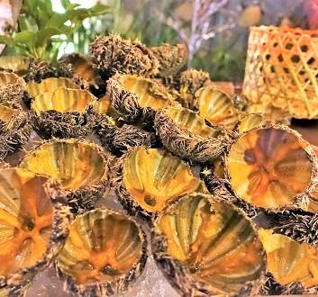 Africa, Mauritius, Sea Urchins