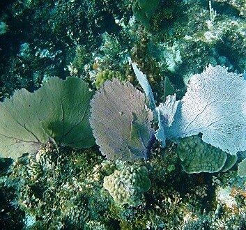 墨西哥, 里维埃拉玛雅, 珊瑚礁