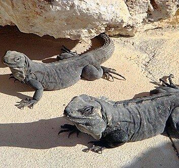 墨西哥, 里维埃拉玛雅, Secrets Maroma Beach Resort, 野生生物