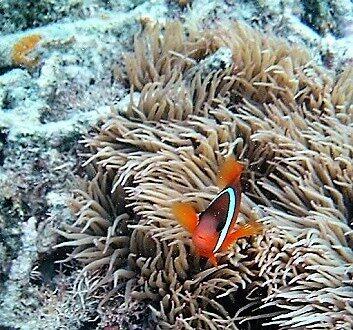 Fiji, Marine Life