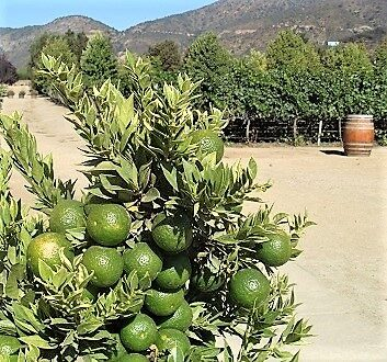 Chile, Limes